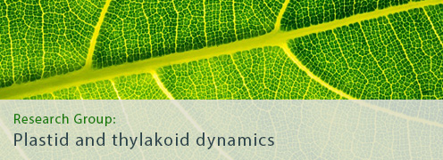 Plastid and thylakoid dynamics